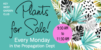 plants for sale every monday